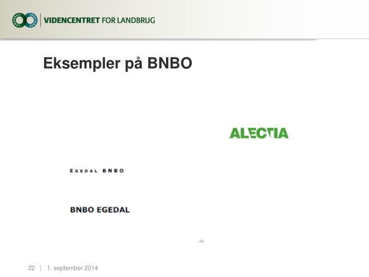 Eksempler på BNBO