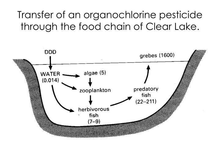 Transfer of an organochlorine pesticide through the food chain of Clear Lake.