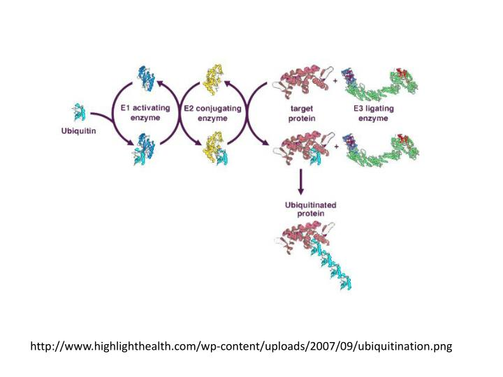 http://www.highlighthealth.com/wp-content/uploads/2007/09/ubiquitination.png