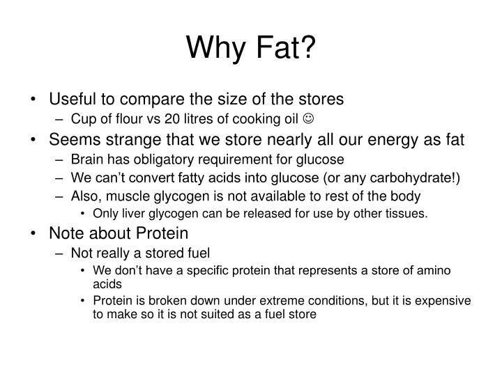Why Fat?
