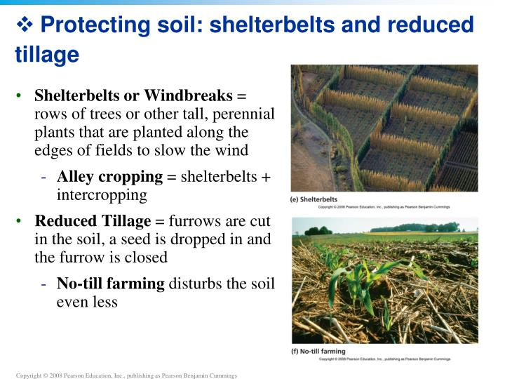 Protecting soil: shelterbelts and reduced tillage