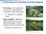 protecting soil terracing and intercropping