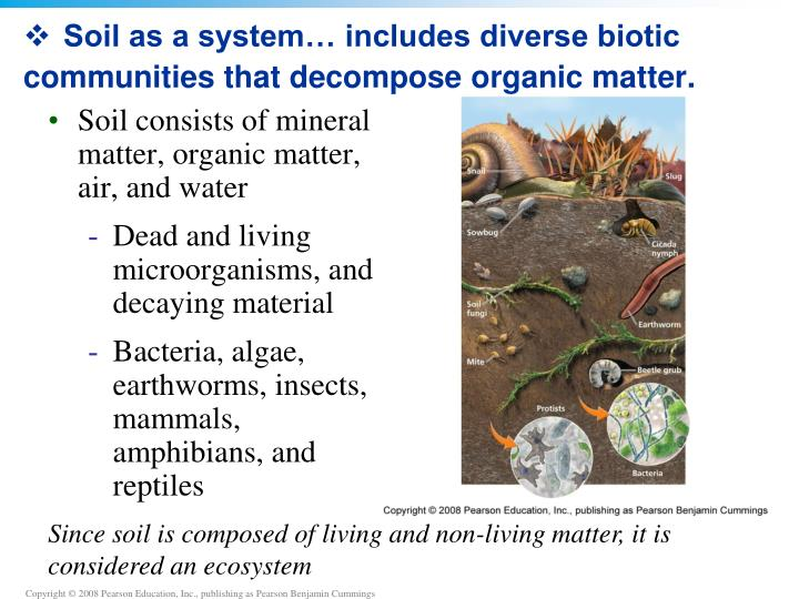 Soil as a system… includes diverse biotic communities that decompose organic matter.