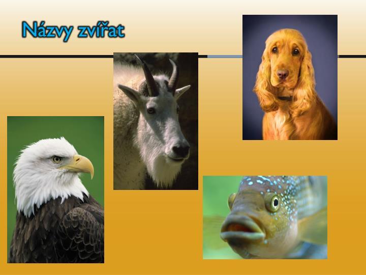 Názvy zvířat