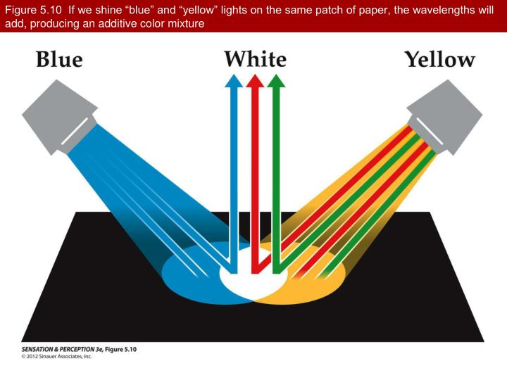 "Figure 5.10  If we shine ""blue"" and ""yellow"" lights on the same patch of paper, the wavelengths will add, producing an additive color mixture"