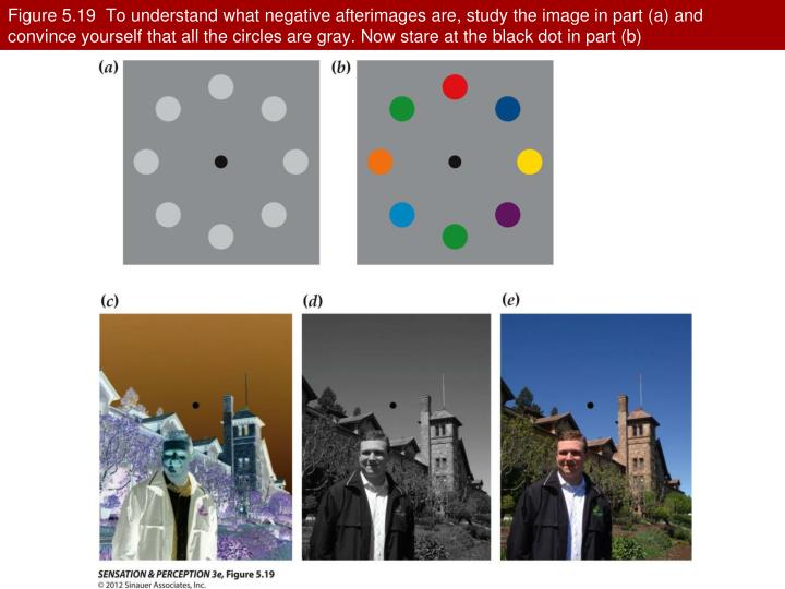 Figure 5.19  To understand what negative afterimages are, study the image in part (a) and convince yourself that all the circles are gray. Now stare at the black dot in part (b)