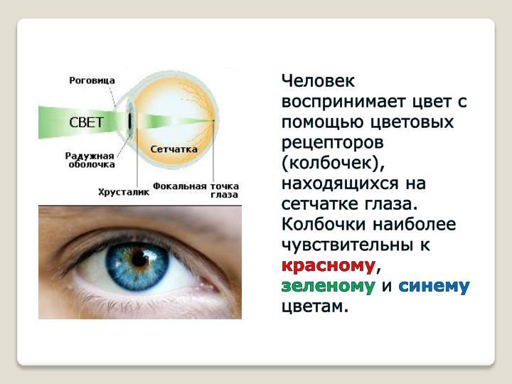 Человек воспринимает цвет с помощью цветовых рецепторов (колбочек), находящихся на сетчатке глаза.