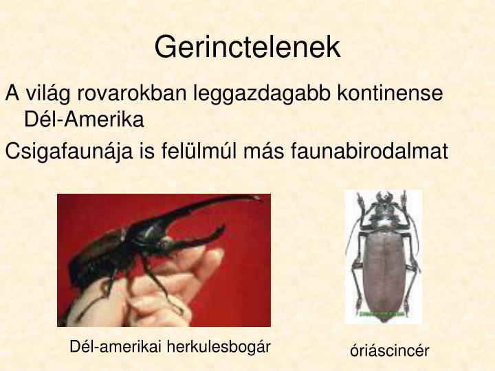 Dél-amerikai herkulesbogár