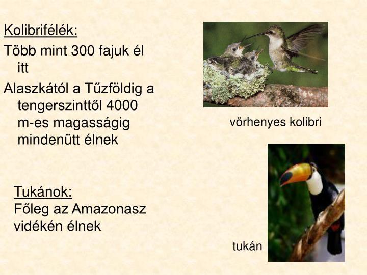 vörhenyes kolibri