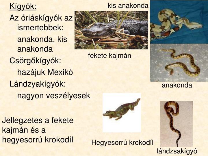 kis anakonda