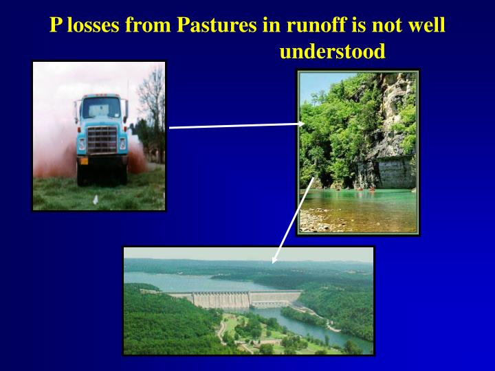 P losses from Pastures in runoff is not well