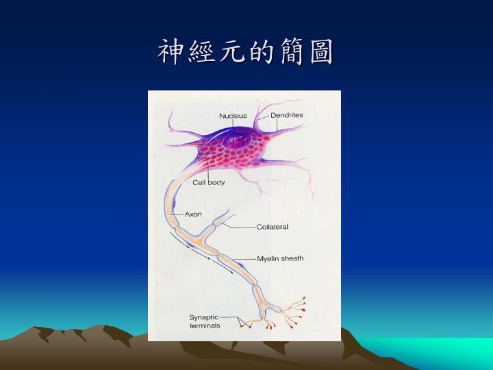 神經元的簡圖