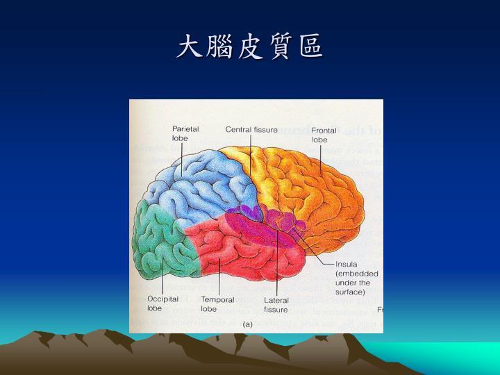 大腦皮質區