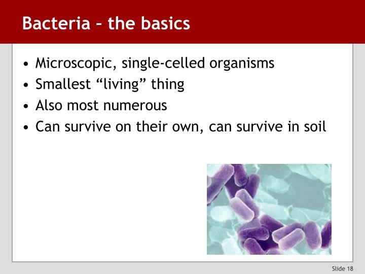 Bacteria – the basics