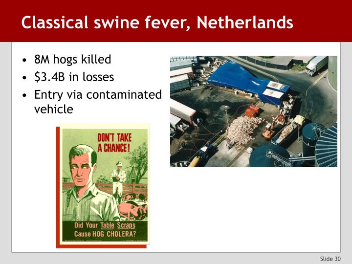Classical swine fever, Netherlands