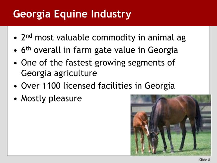 Georgia Equine Industry
