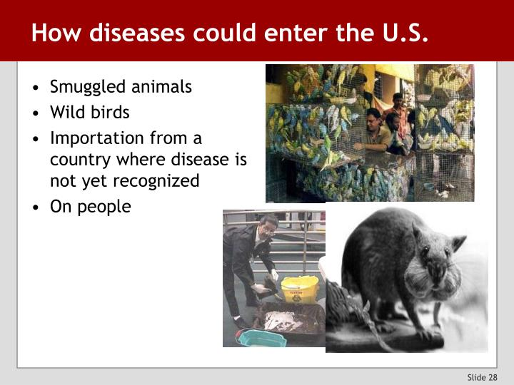 How diseases could enter the U.S.
