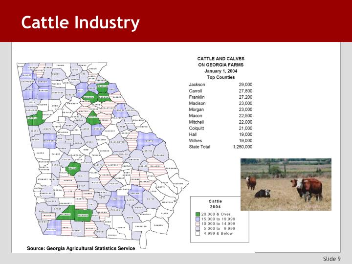 Cattle Industry