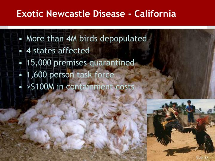 Exotic Newcastle Disease - California