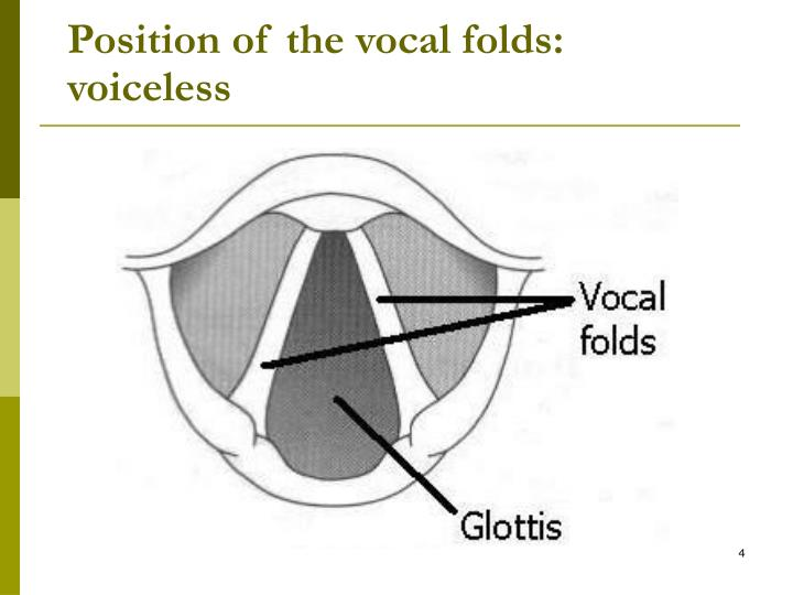 Position of the vocal folds: voiceless