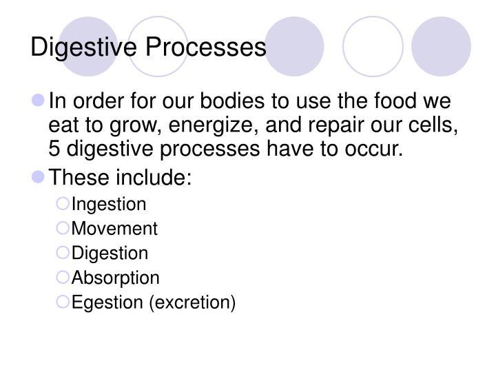 Digestive Processes