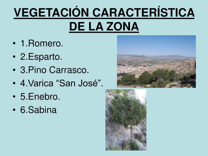 VEGETACIÓN CARACTERÍSTICA DE LA ZONA