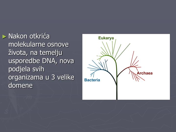 Nakon otkrića molekularne osnove života, na temelju usporedbe DNA, nova podjela svih organizama u 3 velike domene