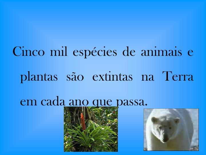 Cinco mil espécies de animais e plantas são extintas na Terra em cada ano que passa.