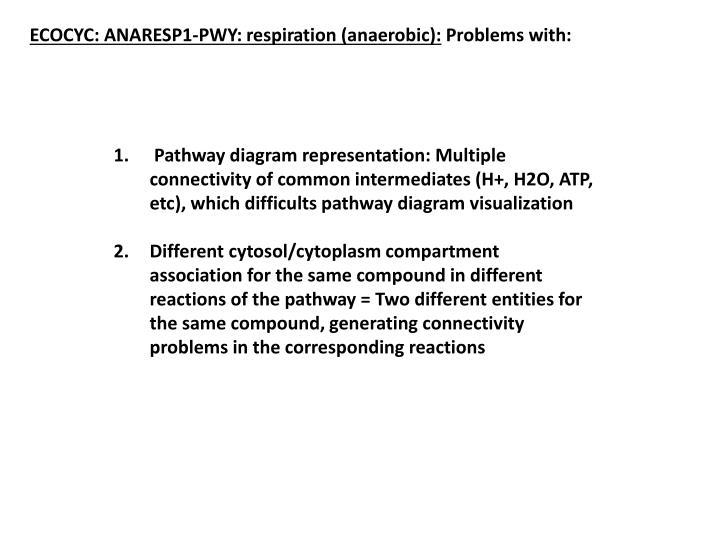 ECOCYC: ANARESP1-PWY: