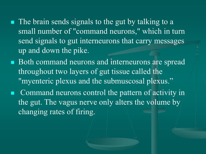 "The brain sends signals to the gut by talking to a small number of ""command neurons,"" which in turn send signals to gut interneurons that carry messages up and down the pike."