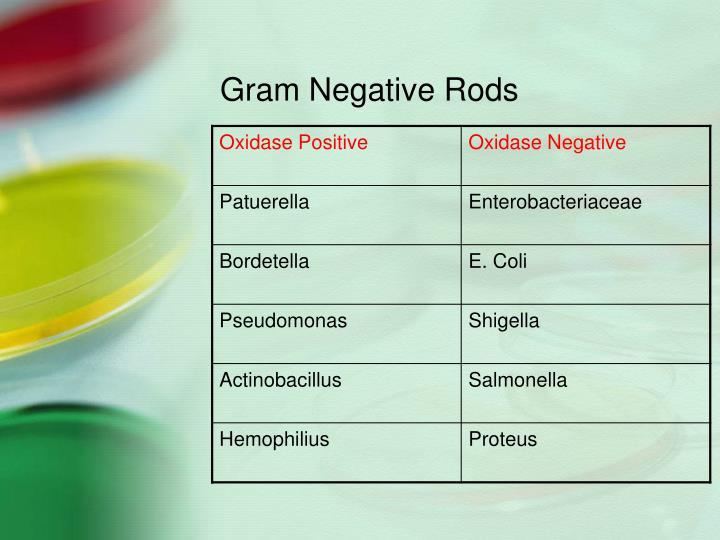 Gram Negative Rods