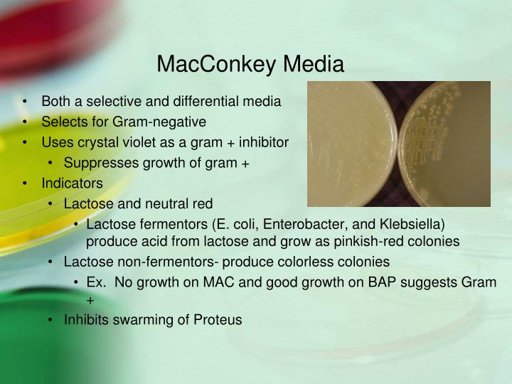MacConkey Media