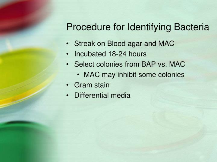 Procedure for Identifying Bacteria