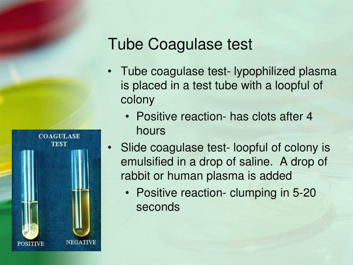 Tube Coagulase test