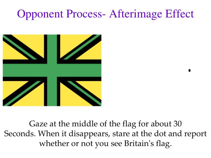Opponent Process- Afterimage Effect
