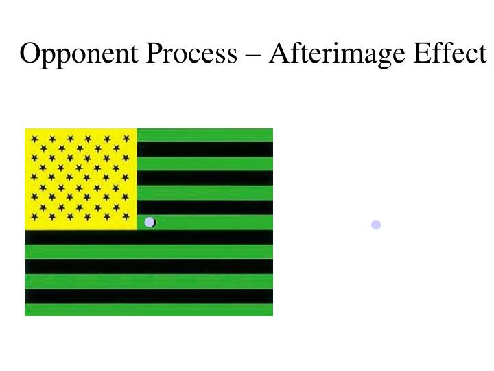 Opponent Process – Afterimage Effect