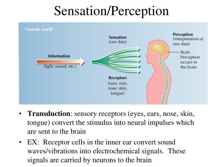 Sensation/Perception