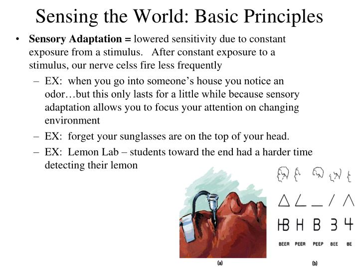 Sensing the World: Basic Principles