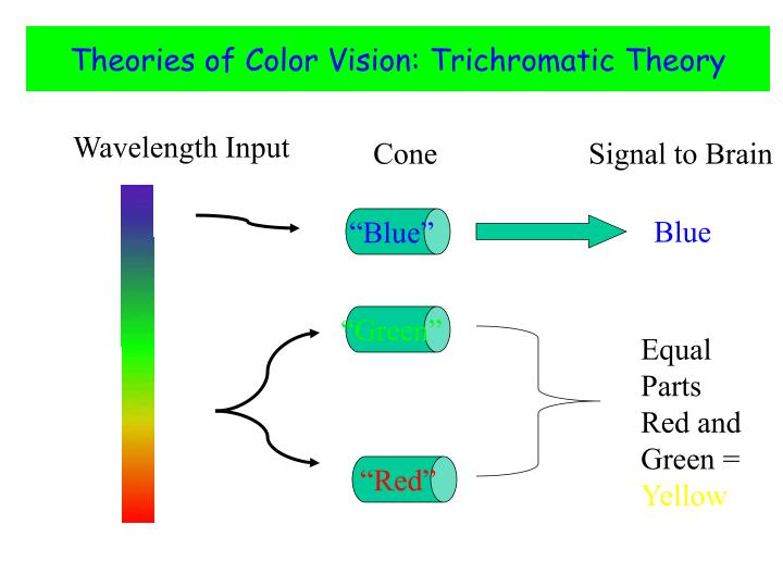 Theories of Color Vision: Trichromatic Theory