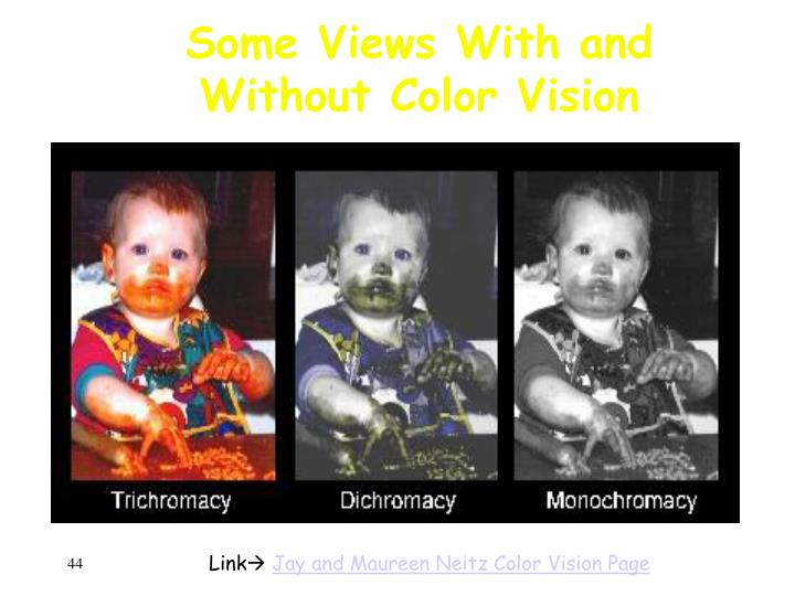 Some Views With and Without Color Vision