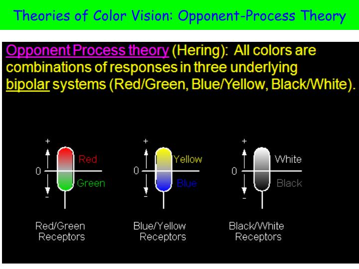 Theories of Color Vision: Opponent-Process Theory