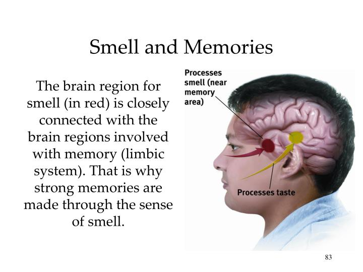 Smell and Memories
