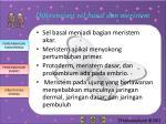 diferensiasi sel basal dan meristem