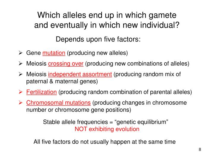 Which alleles end up in which gamete