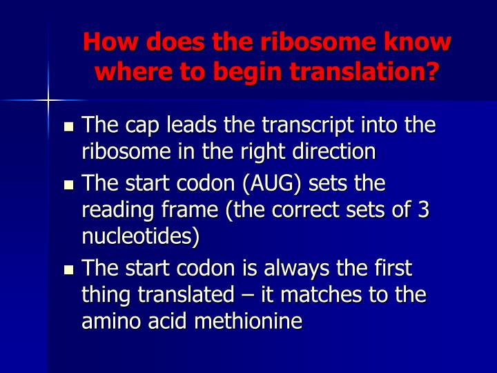 How does the ribosome know where to begin translation?