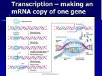 transcription making an mrna copy of one gene