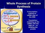 whole process of protein synthesis