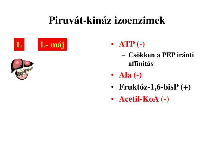 ATP (-)