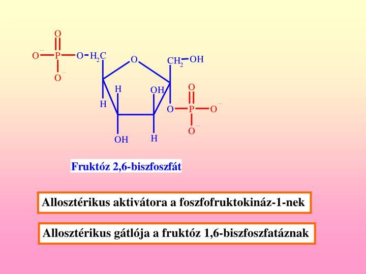Allosztérikus aktivátora a foszfofruktokináz-1-nek