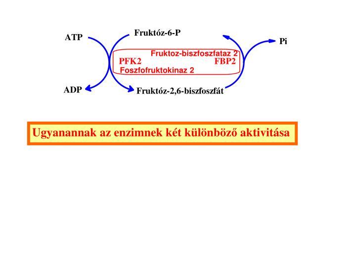 Fruktoz-biszfoszfataz 2